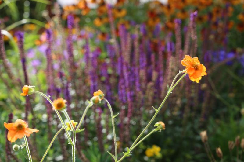 tuinontwerp-tuinadvies-tuinarchitect-tuinaanleg-hovenier-tuinontwerper-Toffe Tuinen-Laura Knoops-stadstuin-kleine tuin-Baarn