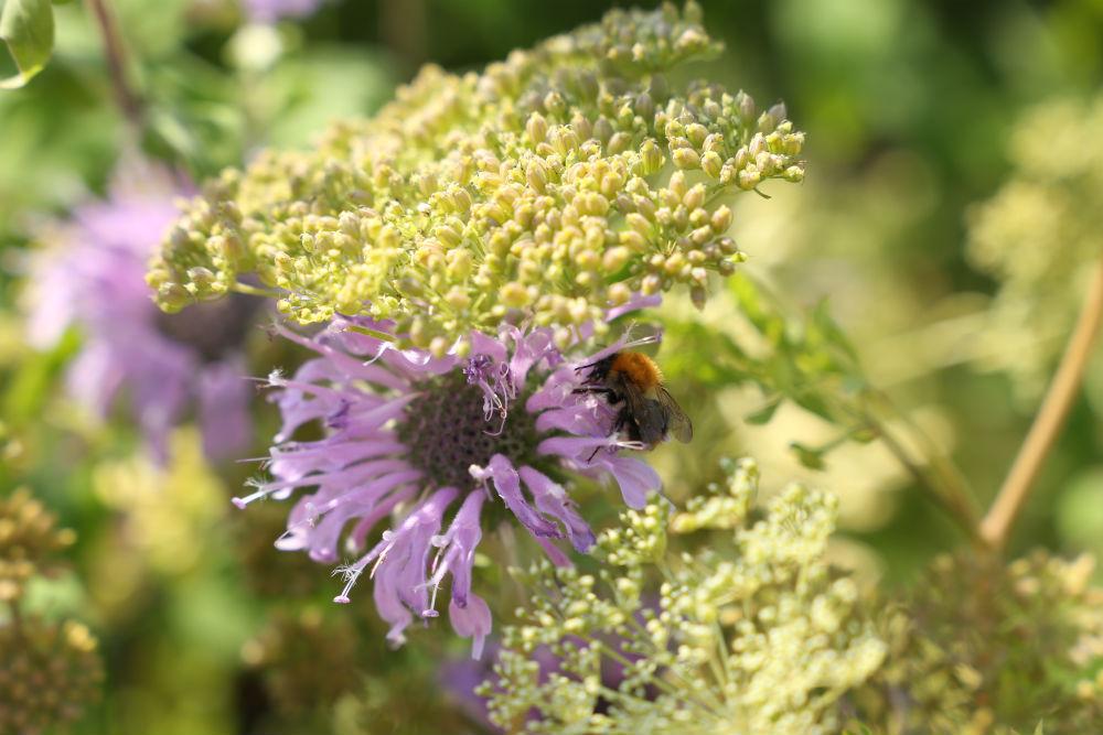 Ode ad Aarde_Laura Knoops-Toffe Tuinen-levende tuinen-natuurrijk-natuurlijk-duurzaam-bijentuin-vlindertuin-vogeltuin-biodiversiteit-ecologie